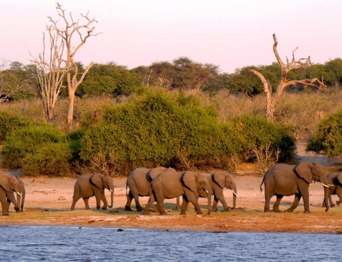 What to Expect when Going on Safari in Botswana